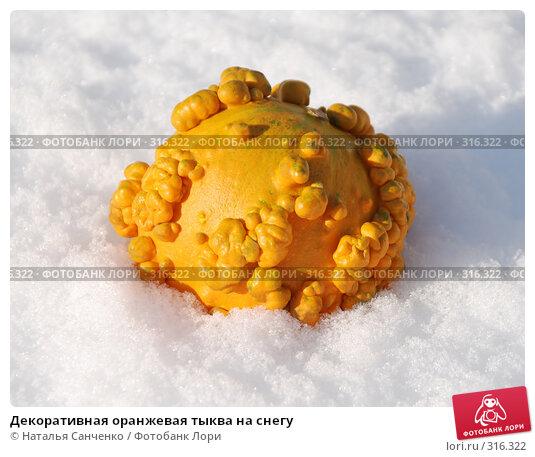Декоративная оранжевая тыква на снегу, фото № 316322, снято 14 ноября 2007 г. (c) Наталья Санченко / Фотобанк Лори