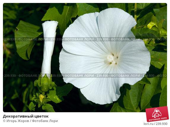 Декоративный цветок, фото № 239930, снято 5 августа 2007 г. (c) Игорь Жоров / Фотобанк Лори