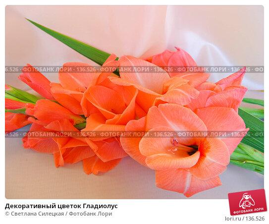 Декоративный цветок Гладиолус, фото № 136526, снято 22 августа 2007 г. (c) Светлана Силецкая / Фотобанк Лори