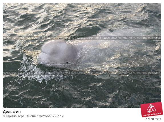 Дельфин, эксклюзивное фото № 914, снято 19 сентября 2005 г. (c) Ирина Терентьева / Фотобанк Лори