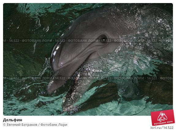 Дельфин, фото № 14522, снято 12 июля 2006 г. (c) Евгений Батраков / Фотобанк Лори