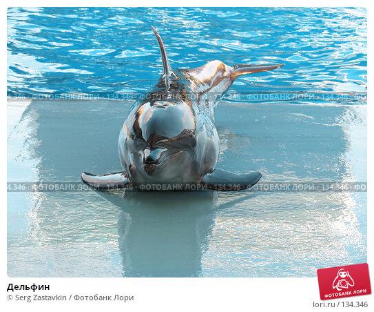 Дельфин, фото № 134346, снято 4 апреля 2007 г. (c) Serg Zastavkin / Фотобанк Лори