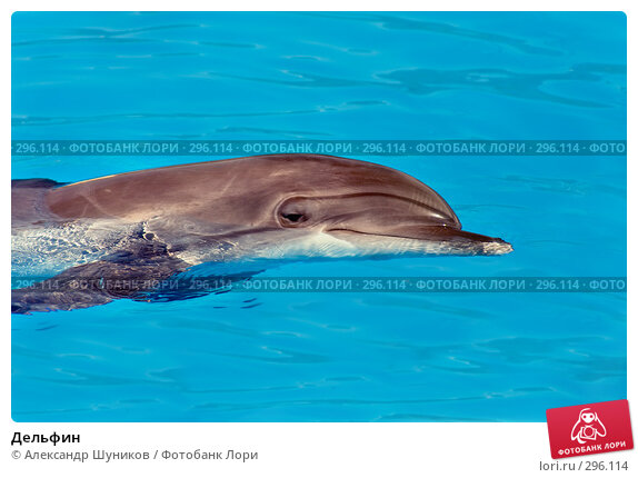 Дельфин, фото № 296114, снято 12 мая 2008 г. (c) Александр Шуников / Фотобанк Лори