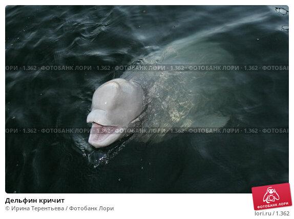 Дельфин кричит, эксклюзивное фото № 1362, снято 15 сентября 2005 г. (c) Ирина Терентьева / Фотобанк Лори