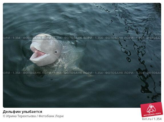 Купить «Дельфин улыбается», эксклюзивное фото № 1354, снято 15 сентября 2005 г. (c) Ирина Терентьева / Фотобанк Лори
