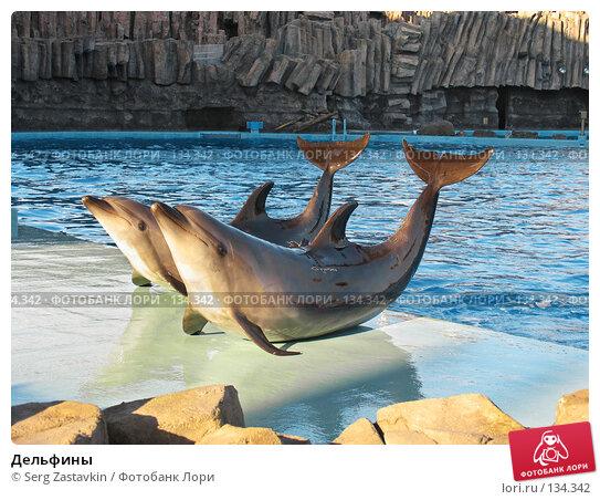 Дельфины, фото № 134342, снято 4 апреля 2007 г. (c) Serg Zastavkin / Фотобанк Лори