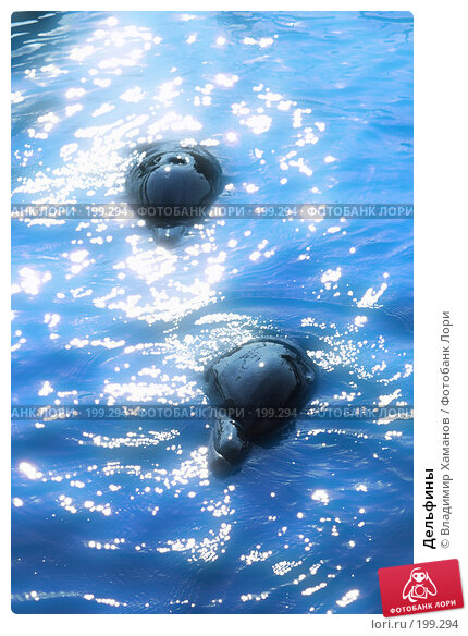 Дельфины, фото № 199294, снято 29 апреля 2017 г. (c) Владимир Хаманов / Фотобанк Лори