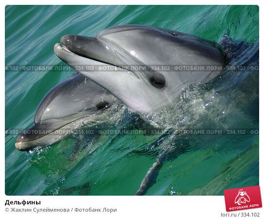Купить «Дельфины», фото № 334102, снято 12 июня 2008 г. (c) Жаклин Сулейменова / Фотобанк Лори