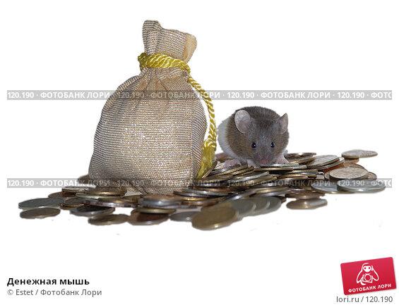 Денежная мышь, фото № 120190, снято 21 января 2017 г. (c) Estet / Фотобанк Лори