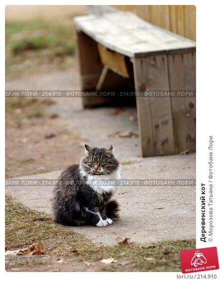 Деревенский кот, фото № 214910, снято 12 ноября 2005 г. (c) Морозова Татьяна / Фотобанк Лори