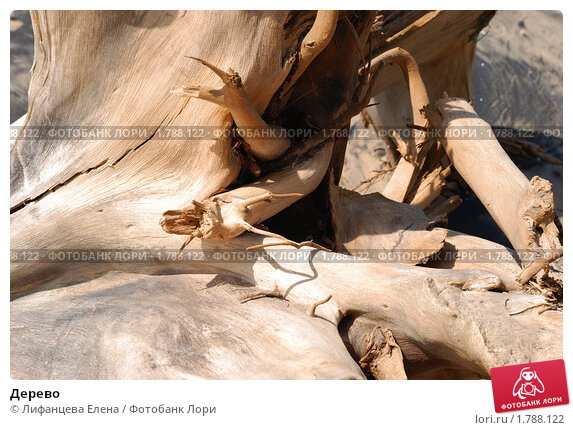 Купить «Дерево», фото № 1788122, снято 1 января 2010 г. (c) Лифанцева Елена / Фотобанк Лори