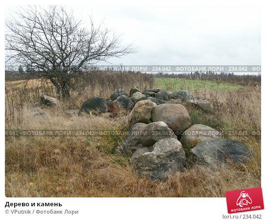 Дерево и камень, фото № 234042, снято 27 октября 2004 г. (c) VPutnik / Фотобанк Лори