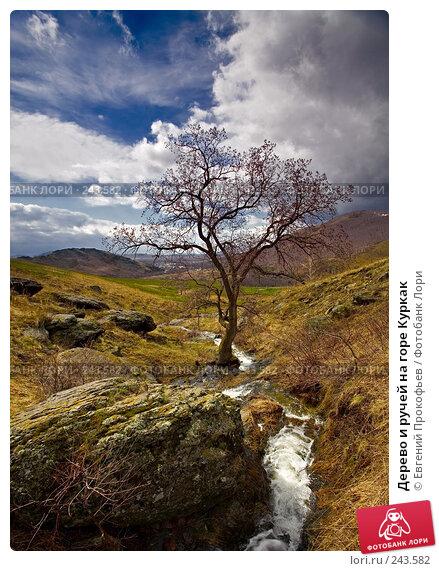 Дерево и ручей на горе Куркак, фото № 243582, снято 5 мая 2007 г. (c) Евгений Прокофьев / Фотобанк Лори