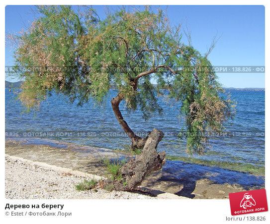 Дерево на берегу, фото № 138826, снято 5 июля 2007 г. (c) Estet / Фотобанк Лори
