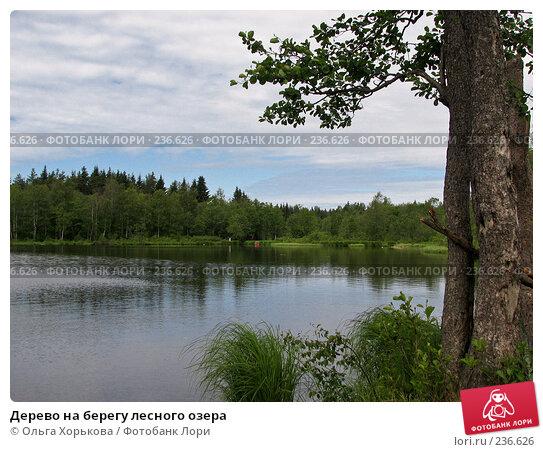 Дерево на берегу лесного озера, фото № 236626, снято 11 июня 2007 г. (c) Ольга Хорькова / Фотобанк Лори