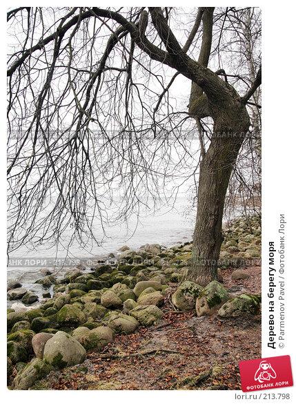 Дерево на берегу моря, фото № 213798, снято 13 февраля 2008 г. (c) Parmenov Pavel / Фотобанк Лори
