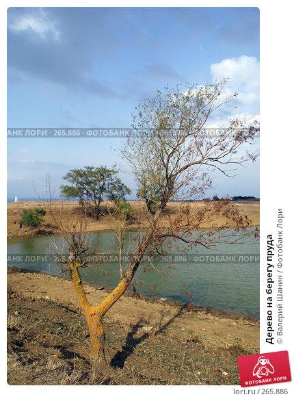 Дерево на берегу пруда, фото № 265886, снято 24 сентября 2007 г. (c) Валерий Шанин / Фотобанк Лори