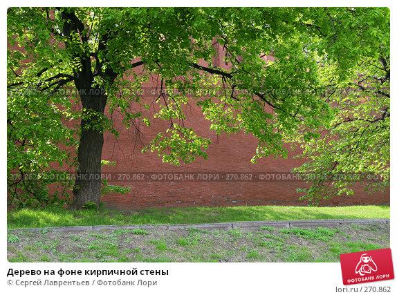Дерево на фоне кирпичной стены, фото № 270862, снято 2 мая 2008 г. (c) Сергей Лаврентьев / Фотобанк Лори