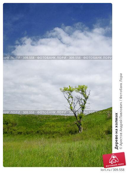 Купить «Дерево на холмах», фото № 309558, снято 20 апреля 2008 г. (c) Арестов Андрей Павлович / Фотобанк Лори