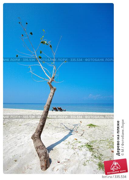 Дерево на пляже, фото № 335534, снято 21 июля 2017 г. (c) Михаил / Фотобанк Лори