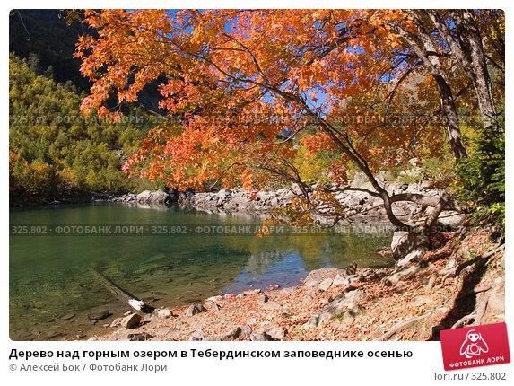 Дерево над горным озером в Тебердинском заповеднике осенью, фото № 325802, снято 29 сентября 2007 г. (c) Алексей Бок / Фотобанк Лори