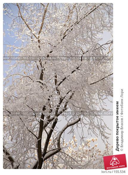 Дерево покрытое инеем, фото № 155534, снято 23 января 2005 г. (c) Владимир Власов / Фотобанк Лори