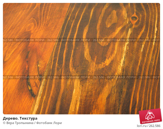 Дерево. Текстура, фото № 262586, снято 14 апреля 2008 г. (c) Вера Тропынина / Фотобанк Лори