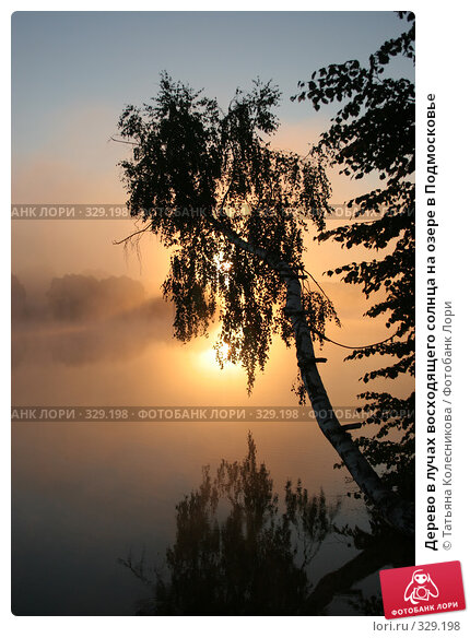 Дерево в лучах восходящего солнца на озере в Подмосковье, фото № 329198, снято 30 июля 2005 г. (c) Татьяна Колесникова / Фотобанк Лори