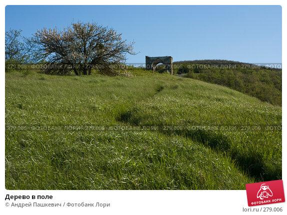 Дерево в поле, фото № 279006, снято 3 мая 2007 г. (c) Андрей Пашкевич / Фотобанк Лори