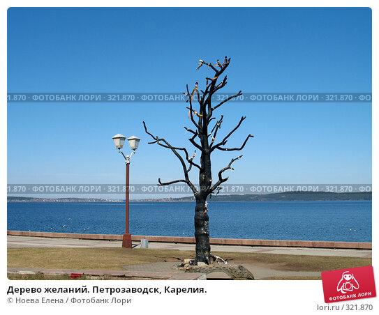 Дерево желаний. Петрозаводск, Карелия., фото № 321870, снято 3 мая 2008 г. (c) Ноева Елена / Фотобанк Лори