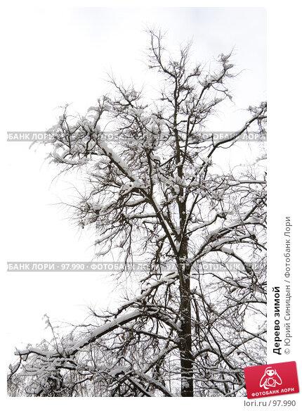 Дерево зимой, фото № 97990, снято 17 февраля 2007 г. (c) Юрий Синицын / Фотобанк Лори