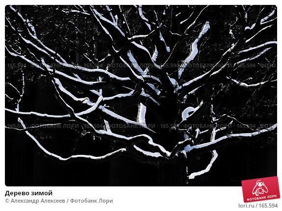 Дерево зимой, эксклюзивное фото № 165594, снято 6 марта 2007 г. (c) Александр Алексеев / Фотобанк Лори