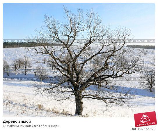 Дерево зимой, фото № 185170, снято 23 декабря 2007 г. (c) Максим Рыжов / Фотобанк Лори