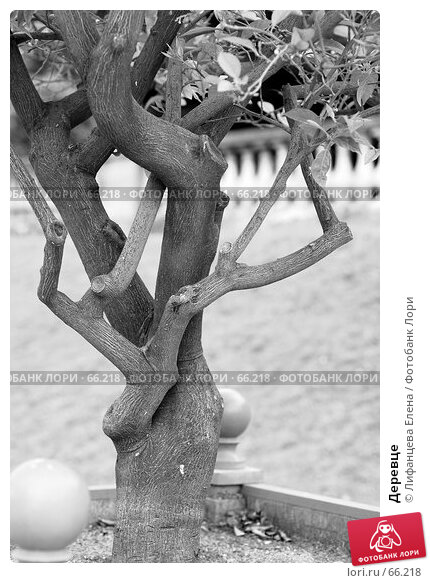Деревце, фото № 66218, снято 18 июня 2007 г. (c) Лифанцева Елена / Фотобанк Лори