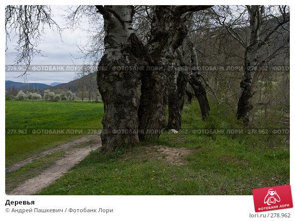 Купить «Деревья», фото № 278962, снято 2 мая 2007 г. (c) Андрей Пашкевич / Фотобанк Лори