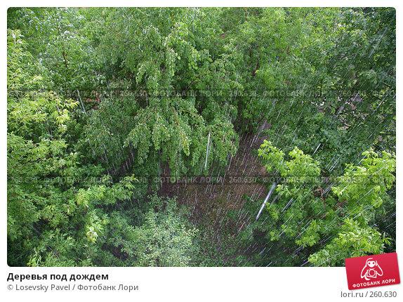Деревья под дождем, фото № 260630, снято 30 мая 2017 г. (c) Losevsky Pavel / Фотобанк Лори