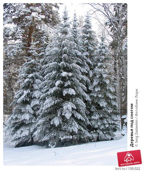 Деревья под снегом, фото № 130022, снято 23 марта 2005 г. (c) Serg Zastavkin / Фотобанк Лори