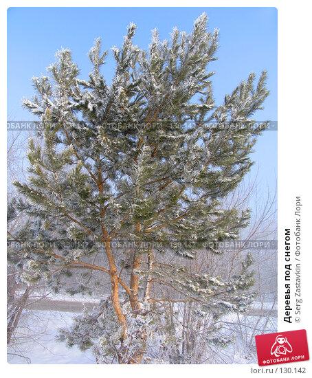 Деревья под снегом, фото № 130142, снято 25 марта 2005 г. (c) Serg Zastavkin / Фотобанк Лори