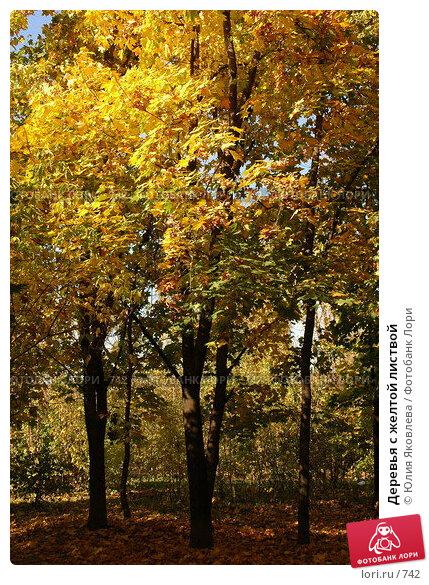 Деревья с желтой листвой, фото № 742, снято 1 октября 2005 г. (c) Юлия Яковлева / Фотобанк Лори