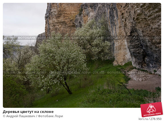 Деревья цветут на склоне, фото № 278950, снято 30 апреля 2007 г. (c) Андрей Пашкевич / Фотобанк Лори
