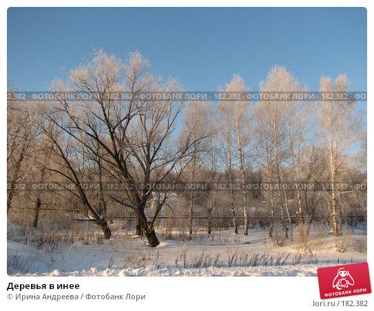 Купить «Деревья в инее», фото № 182382, снято 20 января 2008 г. (c) Ирина Андреева / Фотобанк Лори