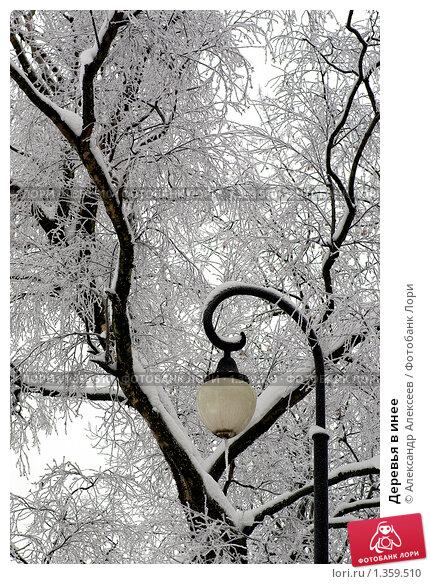 Купить «Деревья в инее», эксклюзивное фото № 1359510, снято 10 января 2010 г. (c) Александр Алексеев / Фотобанк Лори