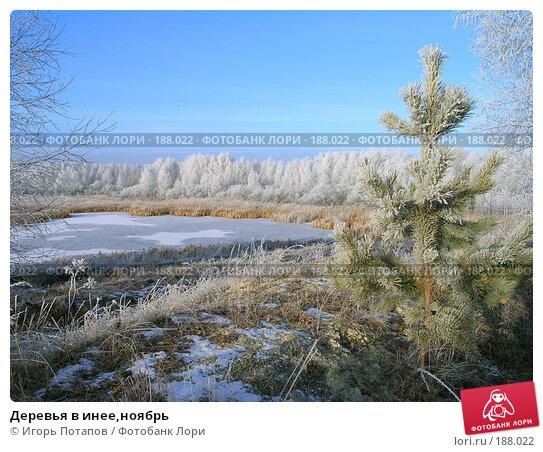 Деревья в инее,ноябрь, фото № 188022, снято 22 июня 2005 г. (c) Игорь Потапов / Фотобанк Лори