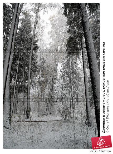 Деревья в зимнем лесу, покрытые первым снегом, фото № 149354, снято 14 октября 2007 г. (c) Сергей Пестерев / Фотобанк Лори