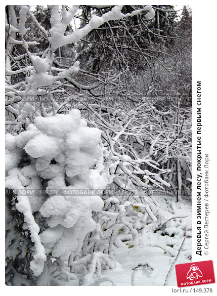 Деревья в зимнем лесу, покрытые первым снегом, фото № 149378, снято 14 октября 2007 г. (c) Сергей Пестерев / Фотобанк Лори
