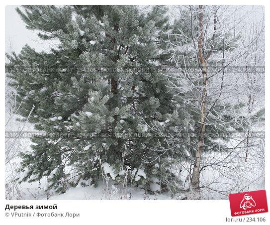 Деревья зимой, фото № 234106, снято 25 ноября 2004 г. (c) VPutnik / Фотобанк Лори
