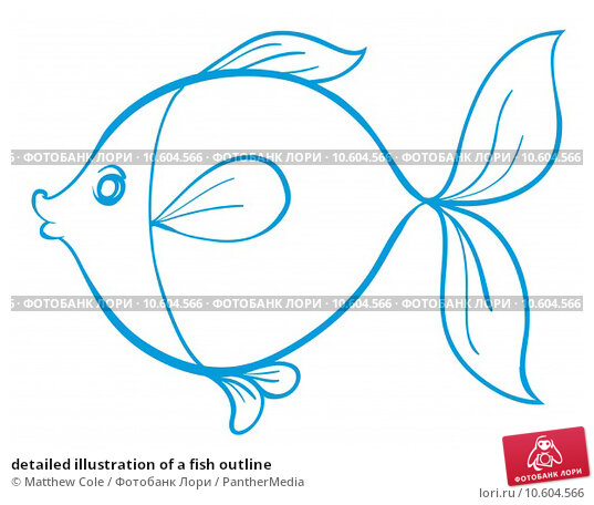 detailed illustration of a fish outline. Стоковая иллюстрация, иллюстратор Matthew Cole / PantherMedia / Фотобанк Лори