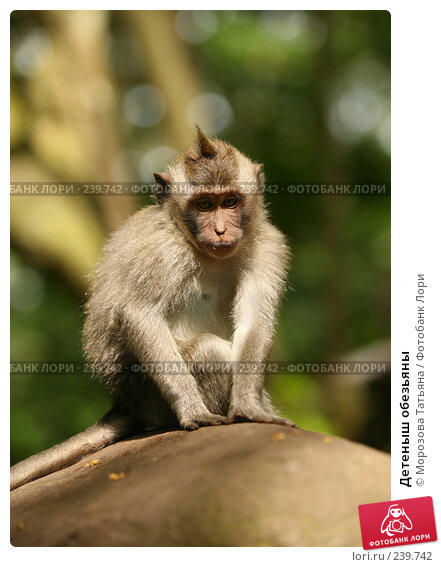 Детеныш обезьяны, фото № 239742, снято 24 февраля 2008 г. (c) Морозова Татьяна / Фотобанк Лори