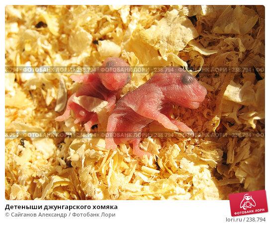Детеныши джунгарского хомяка, эксклюзивное фото № 238794, снято 30 марта 2008 г. (c) Сайганов Александр / Фотобанк Лори