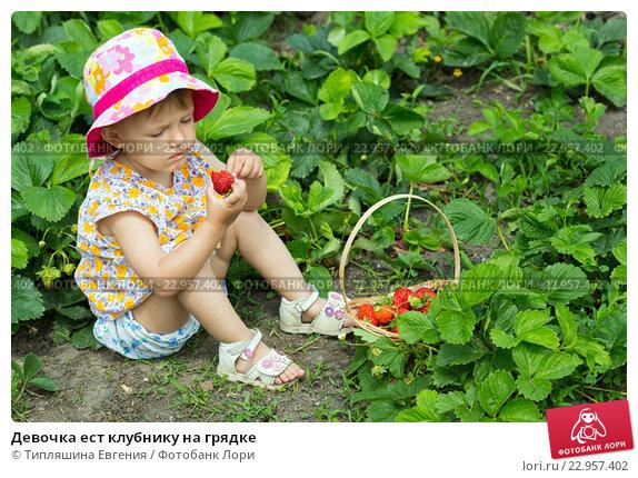 Кто на грядке ест клубнику